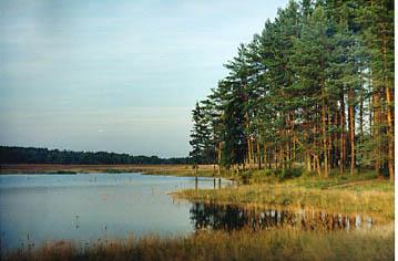 Лесные ресурсы Россия russia