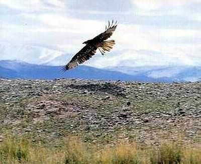 23.04.2003. В Швеции голодный орел сожрал таксу, которая